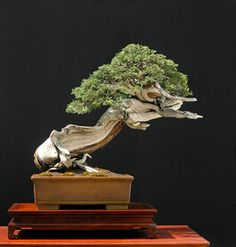 Image from http://www.artofbonsai.org/america_europe_contest/e031_juniperus_scopulorum_370.jpg.