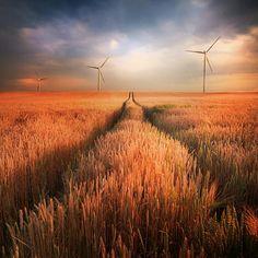 Field of wind