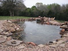 This pond is better than any doggie pool I have ever seen! A must for my country doggie daycare!