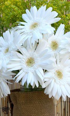 Pretty white flowers ==