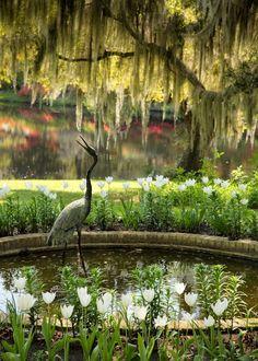 Crane Statue and Pond, Middleton Place, Charleston, SC  Doug's Photo Blog #charleston