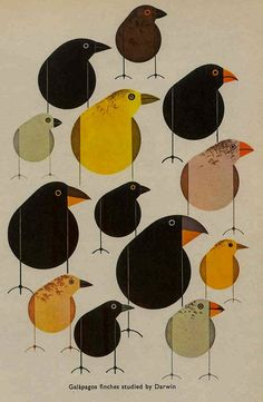 Galapagos finches studied by Darwin, Charley Harper 60s old-art-and-illustration