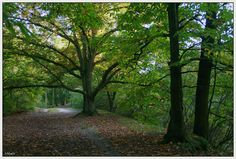 Nature in Hofstade, Belgium (autumn) - a photo by magda 1980