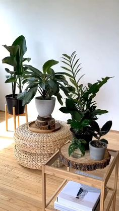 A good rule of thumb, and an easy way to add the rotation of houseplants to your routine without adding too much strain on your memory, is to give your plant a quarter turn every time you water it. This should keep your plant growing evenly and healthily. #houseplant #plants #plant #plantsofinstagram #houseplants #plantsmakepeoplehappy #urbanjungle #houseplantclub #indoorplants Fake Plants, Hanging Plants, Indoor Plants, Room Decor Bedroom, Diy Room Decor, Decoration Plante, Interior Plants, Plant Design, Plant Decor