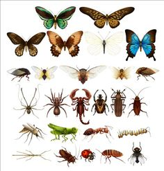 Vector Insects huge collection 02