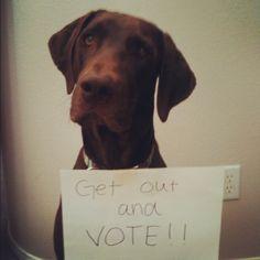 gotta vote!