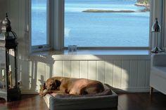 Sleeping beauty Rhodesian Ridgeback, Sleeping Beauty, Dogs, Animals, Animales, Animaux, Pet Dogs, Doggies, Animal