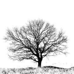 TREE BLACK & WHITE | Black and White tree Art Print by eudaldrs | Society6