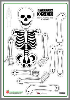 Life-Size Printable Skeleton for Kids Skeletal System Activities, Human Body Activities, Science Activities For Kids, Science Experiments Kids, Science Classroom, Skeleton For Kids, Skeleton Craft, Human Body Organs, Human Body Unit