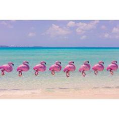 More from stunning photographer Gray Malin - -Bermuda Flamingos
