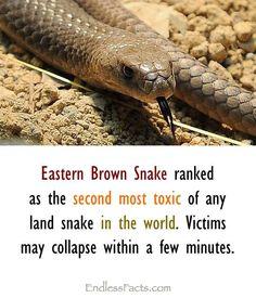 Australia is dangerous