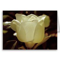 Beautiful magnolia greeting cards