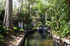 Scenic Boat Tour is an 18 passenger pontoon boat ride on the pristine Winter Park chain of Lakes. Tours available for individuals and groups. Private Tour Groups are also welcome!