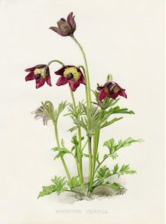 Коллекция картинок: W. Robinson Flora & Sylva Prints by HG Moon 1903
