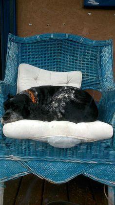 Zen, Throw Pillows, River, Garden, Dogs, Cushions, Garten, Pet Dogs, Doggies