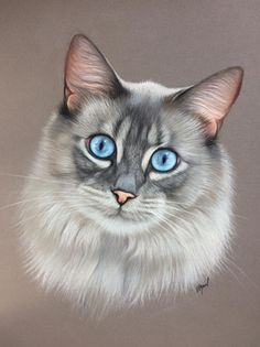 Animal Paintings, Animal Drawings, Image Chat, Color Pencil Art, Warrior Cats, Pastel Art, Cat Drawing, Cat Face, Beautiful Cats