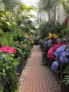 Biltmore Green House - - they always have such beautiful flowers growing in the greenhouses