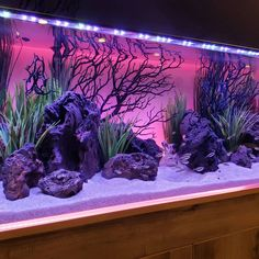 """AQUAPROS (Mike) on Instagram: """"@currentusa has some pretty sweet backlighting equipment 👌 #plantedtank #plantedaquarium #aquarium #freshwateraquarium #freshwatertank…"""" Tropical Fish Aquarium, Tropical Fish Tanks, Nature Aquarium, Aquarium Fish Tank, Planted Aquarium, Aquarium Stand, Aquarium Setup, Fish Aquarium Decorations, Cool Fish Tank Decorations"""