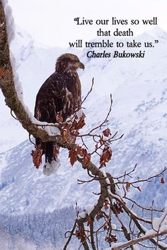 "Poet Charles Bukowski wrote of empowerment found if we ""Live our lives so well that death will tremble to take us."" – On image of golden eagle in Alaska taken by Dr. Joseph T. McGinn – Explore quotes of wisdom at http://www.examiner.com/article/wise-quotes-to-inspire-learning-and-springboard-action?cid=rss"