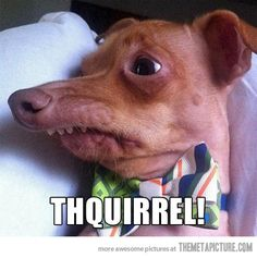 thiquirrel!