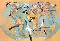 Arctic birds migrate earlier under climate change