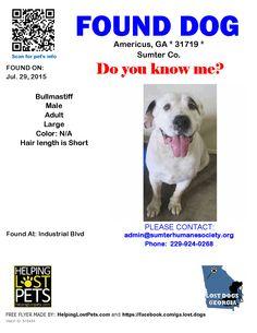 Found Dog - Bullmastiff - Americus, GA, United States