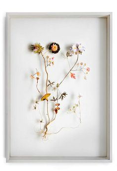 """Flower Constructions"" made from pressed flowers and cut-out images, by Anne Ten Donkelaar. Netherlands."