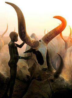 Ankole Long Horn of Uganda