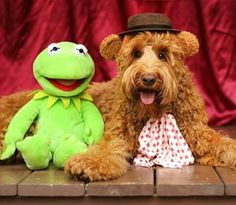 And Fozzie Bear. | This Goldendoodle Won Halloween