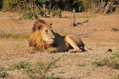 Game drive in South Luangwa National Park Zambia -- reiservaring -- #Zambia #South Luangwa National Park http://www.mambulu.com/over-ons/reiservaringen/500-familie-van-houts-helmond.html