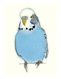 Blue Budgie Art - Neville - 4 X 6 print