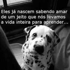 APRENDENDO SEMPRE COM ELES ❤❤❤ #petmeupet #petshop #viralata #golden #labrador #shihtzu #lhasaapso #luludapomerania #pug #bulldog #cachorro #cachorroterapia #cachorroetudodebom #caopanheiro #filhode4patas #maedecachorro #paidecachorro