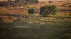 De zon verspreidt zich over de heide   Flickr - Photo Sharing!