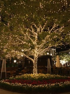 35 Inspiring Christmas Outdoor Lights Decoration Ideas - Outdoor lighting adds to the fun of Christmas. Many people have outdoor display for the holidays. It adds warmth and joy to the celebrations. Outdoor Tree Lighting, Outdoor Trees, Backyard Lighting, String Lights Outdoor, Outdoor Gardens, Lighting Ideas, Outdoor Fairy Lights, Garden Fairy Lights, Outdoor Christmas