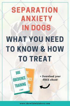 Separation Anxiety in Dogs - What You Need to Know and How to Treat Dog Anxiety Symptoms Puppy Separation Anxiety Anxiety Supplements Interactive Dog Toys Dog Puzzle Toys Dog Separation Anxiety, Dog Anxiety, Anxiety Tips, Anxiety Help, Dog Training Classes, Training Your Dog, Training Tips, Training Schedule, Training Online