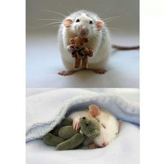 This woman makes bears for mice and rats ..... How cute is that?