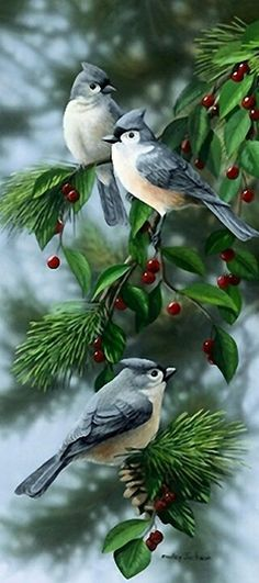 Bird art - title Jewels - by Wildlife artist Bradley Jackson Pretty Birds, Love Birds, Beautiful Birds, Animals Beautiful, Bird Pictures, Animal Pictures, Kinds Of Birds, Little Birds, Colorful Birds
