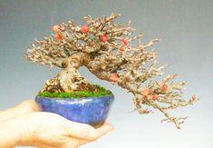 Bonsai Beautyberry & Other Little Gems Mame Bonsai, Bonsai Styles, Bonsai Art, Minis, Miniature, Japanese, Fruit, Flowers, Plants