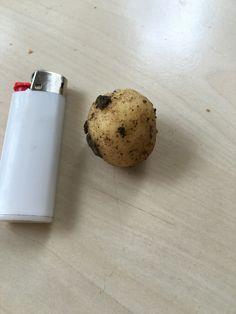 Yanlışlıkla kopardığım küçük bir patates! Yanındaki çakmak olabildiğince küçüktür! Çöpe atmaya kıyamadım  yıkayıp çiğ çiğ yedim