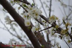 Spring at Auburn NSW http://www.7eye.daifoladi.com