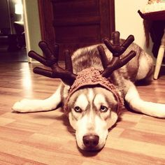 8 Animals That Are Totally Ready for Christmas to be Over