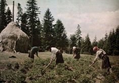 vintage everyday: 27 Rare and Fascinating Color Photographs of Romania in the 1931 - A view of farmers at work in a field in the Carpathain Mountains. Extraordinary People, Where The Heart Is, Vintage Photographs, World Cultures, Romania, Old Photos, 1930s, The Past, Around The Worlds