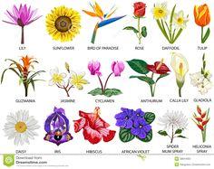 Diferentes tipos de flores y sus nombres 1 esther de bernabe suculent pinterest plants - Todo tipo de plantas con sus nombres ...