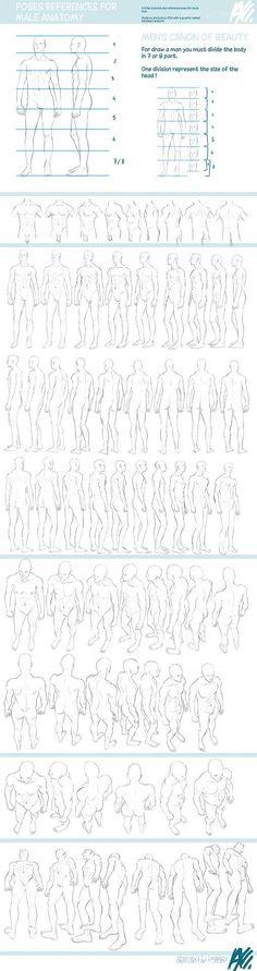Anatomie: studie van het menselijk lichaam. Verhoudingen.