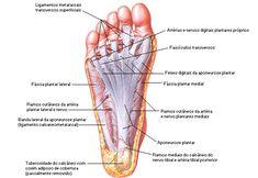 Aula de Anatomia | Músculos do Pé