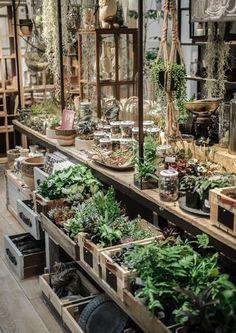 #conservatorygreenhouse #greenhousegardening