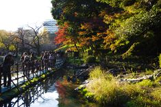 9 Spots to Enjoy Autumn Colors in Tokyo