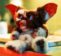 Les Gremlins, Gremlins Gizmo, Horror Movie Characters, Horror Movies, New York Times, Baby Movie, Amblin Entertainment, Halloween Entertaining, Mini Monster