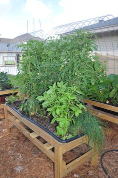 raised garden bed=Bye bye back pain Fruit Garden, Edible Garden, Vegetable Garden, Water Wise Landscaping, Garden Landscaping, Backyard Projects, Garden Projects, Raised Garden Beds, Raised Beds