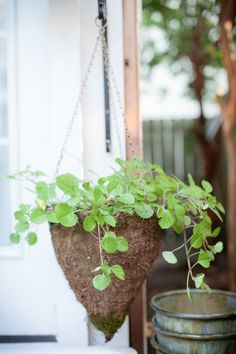 I started tons of sweedish ivy plants from cuttings in preparation for this project- I wanted to have loads of plants around without spending money. Ivy Plants, Cuttings, Propagation, Old Doors, Houseplants, Outdoor Spaces, Different Colors, Modern Design, Planter Pots